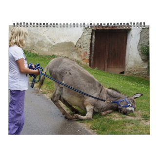 Sweet Donkeys All Year 2016 Calendar