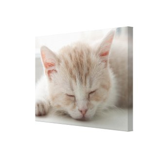 Sweet Dreams Cat Wrapped Canvas wrappedcanvas