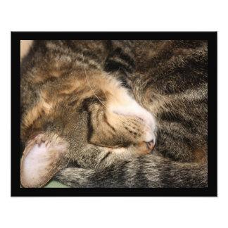 Sweet Dreams Sleeping Cat Photo Enlargement