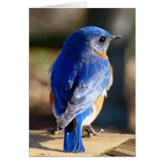 Sweet Eastern Bluebird Greeting Card