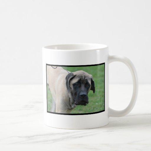 Sweet English Mastiff Coffee Mugs