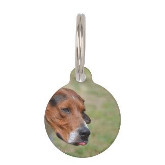 Sweet Entlebucher Mountain Dog Pet ID Tag