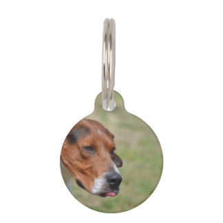 Sweet Entlebucher Mountain Dog Pet Nametags