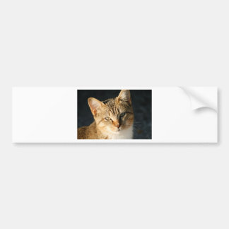 Sweet Feral Kitten With Loving Eyes Bumper Sticker