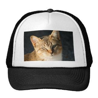 Sweet Feral Kitten With Loving Eyes Trucker Hat