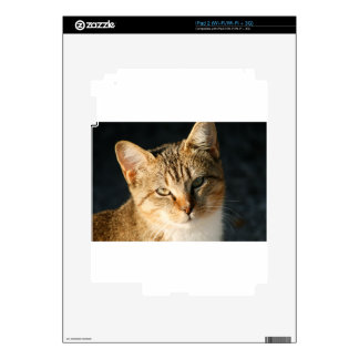 Sweet Feral Kitten With Loving Eyes iPad 2 Decals