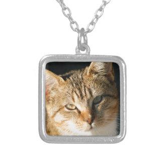 Sweet Feral Kitten With Loving Eyes Pendant