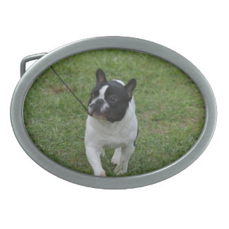Sweet French Bulldog Oval Belt Buckle