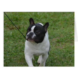 Sweet French Bulldog Greeting Cards