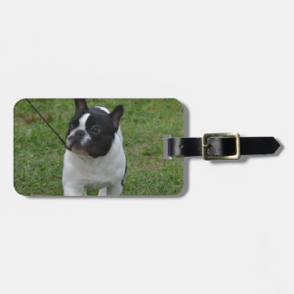 Sweet French Bulldog Tags For Bags