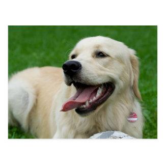 Sweet Friendly Labrador Postcard