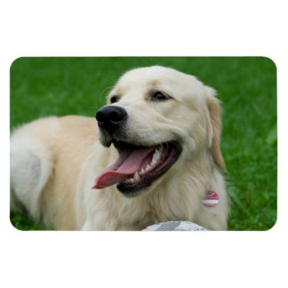 Sweet Friendly Labrador Rectangular Photo Magnet
