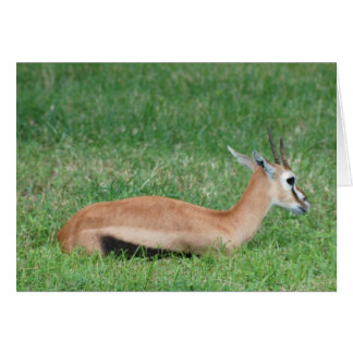 Sweet Gazelle Greeting Cards