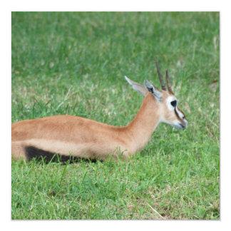 "Sweet Gazelle Invitations 5.25"" Square Invitation Card"