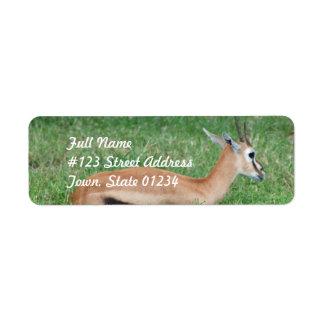 Sweet Gazelle Mailing Labels