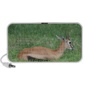 Sweet Gazelle Portable Speakers