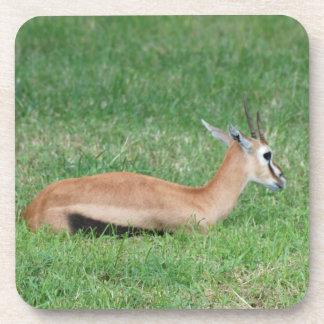 Sweet Gazelle Set of Six Coasters