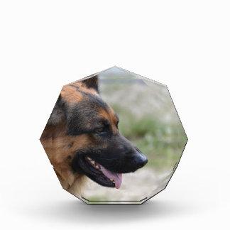 Sweet German Shepherd Dog Acrylic Award