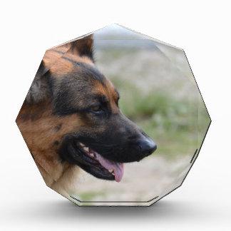 Sweet German Shepherd Dog Award