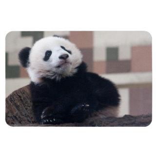 Sweet Giant Panda Baby Magnet