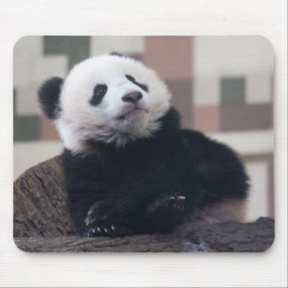 Sweet Giant Panda Baby Mouse Pad