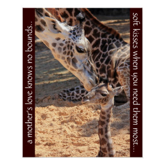 Sweet giraffes; a mother's love knows no bounds... poster