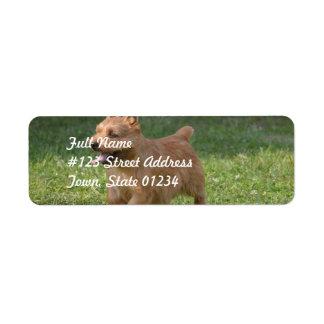 Sweet Glen of Imaal Terrier Labels