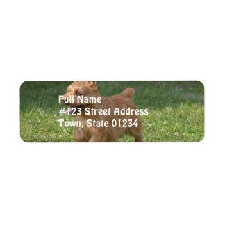Sweet Glen of Imaal Terrier Return Address Labels