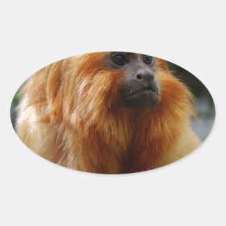 Sweet Golden Lion Tamarin Oval Sticker