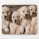 "Sweet Golden Retriever Puppies Mouse Pad<br><div class=""desc"">A photograph of four cute Golden Retriever puppies sitting cheek-to-cheek looking playful and happy.</div>"