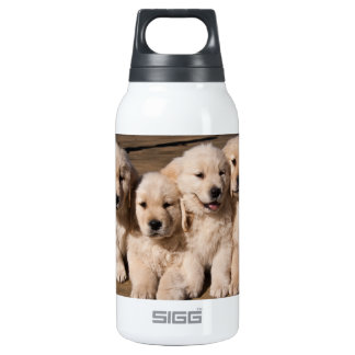Sweet Golden Retriever Puppies 10 Oz Insulated SIGG Thermos Water Bottle