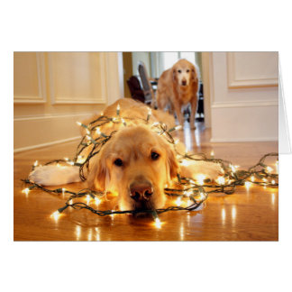 Sweet Golden Retriever tangled up Card