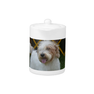 Sweet Grand Basset Dog