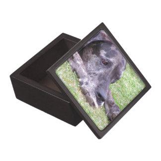 Sweet Great Dane Box  Premium Keepsake Boxes