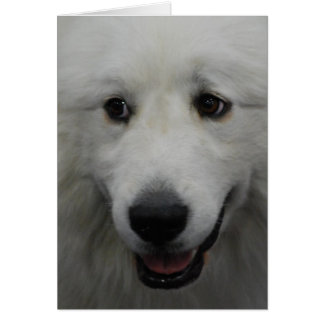 Sweet Great Pyrenees  Note Card
