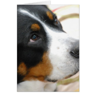 Sweet Greater Swiss Mountain Dog Greeting Cards