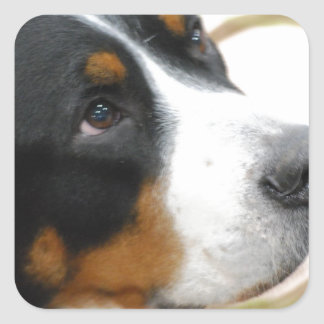 Sweet Greater Swiss Mountain Dog Sticker