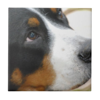 Sweet Greater Swiss Mountain Dog Tile