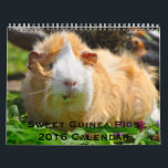 "Sweet Guinea Pigs 2016 Calendar<br><div class=""desc"">12 months of sweet guinea pigs for 2016.</div>"