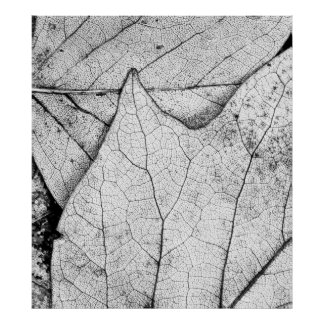 Sweet Gum Leaves in Black and White Poster