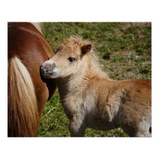Sweet Haflinger Foal Poster