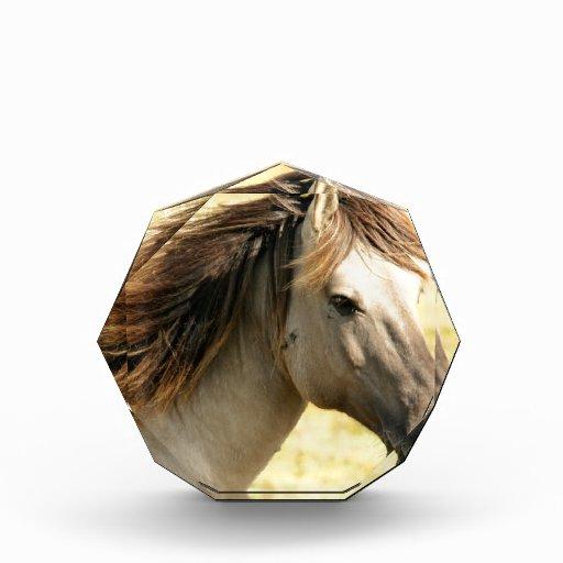 Sweet Horse Award