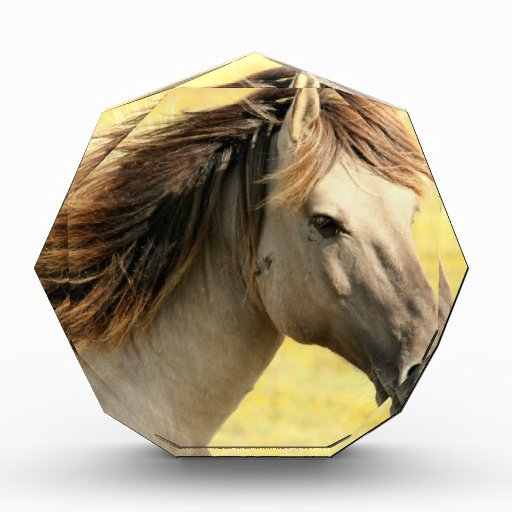 Sweet Horse Acrylic Award