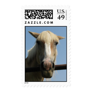 Sweet horse stamps