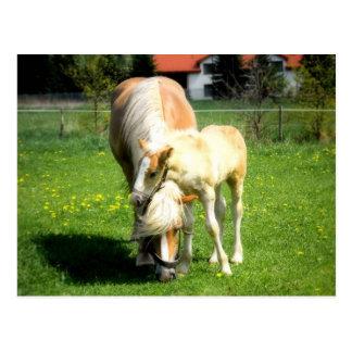 sweet horses design postcard
