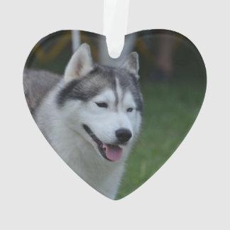 Sweet Husky