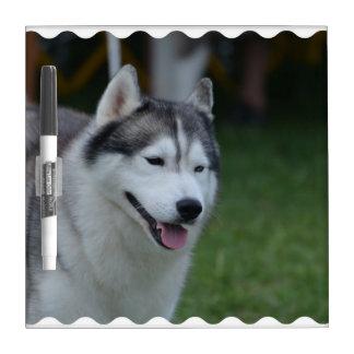 Sweet Husky Dog Dry-Erase Board