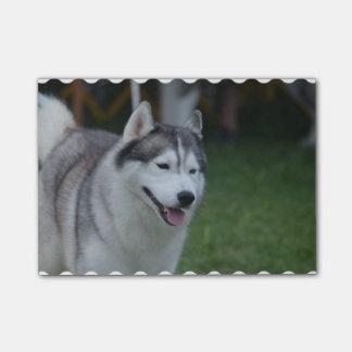 Sweet Husky Post-it® Notes