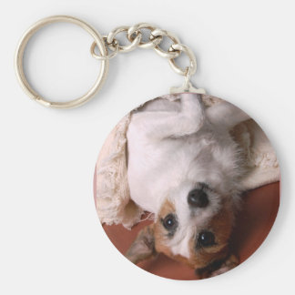 Sweet Jack Russell Key Chains
