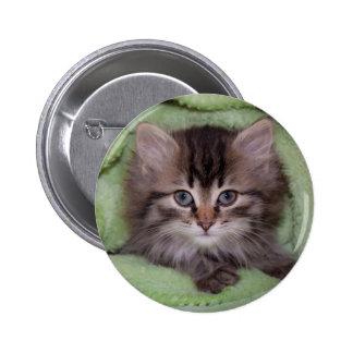 Sweet Kitten Button Pinback Button